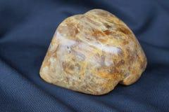 Камедь Kauri v Стоковая Фотография RF