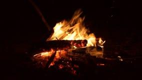 Камин с огнем реветь деревянным с тлеющими углями видеоматериал