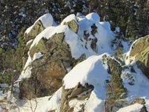 Камни вокруг деревьев Стоковое Изображение