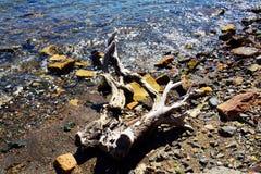 Камни, волны, ствол дерева, минералы воды, абстрактная предпосылка Стоковое Изображение