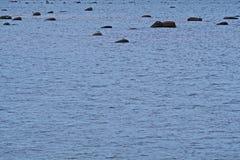 Камни в Балтийском море Стоковое Изображение RF