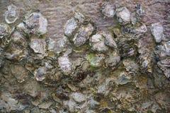 Камни и грязь, предпосылка Стоковые Фото