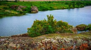 Камни и заводы Стоковая Фотография