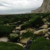 камни и мох Стоковые Изображения