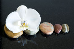 Камни и орхидея Стоковая Фотография RF