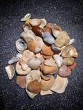 Камни и раковины в темноте Стоковые Фото