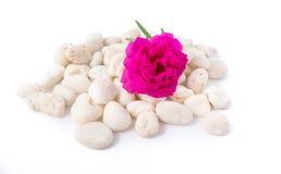 Камни и цветки Стоковое фото RF
