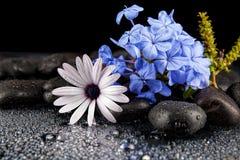 Камни курорта с цветками на темной предпосылке Стоковые Изображения RF