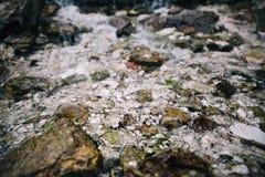 Камни на дне ясной горы текут стоковые изображения rf