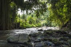 Камни на реке в Ubud, Бали, Индонезии Стоковая Фотография RF