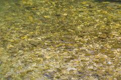 камни под водой Стоковое фото RF