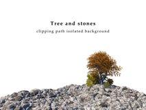 Камни поле и изолированный ландшафт деревьев осени Стоковая Фотография RF