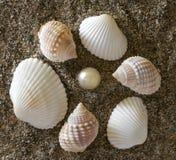 камни раковин Стоковые Фотографии RF