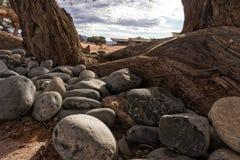Камни рядом с деревом в Намибии дезертируют стоковая фотография rf