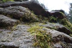 Камни смотря вверх Стоковое фото RF