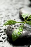 камни спы листьев Стоковая Фотография RF