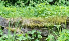Камни с различными дикими растениями стоковые фото