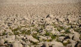 Камни с травой в сухом русле реки стоковые изображения rf