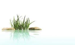 камни травы стоковое фото