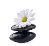 камни цветка Стоковое Фото