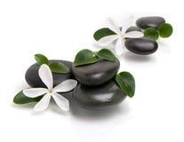 камни цветков намочили белизну Стоковые Фотографии RF