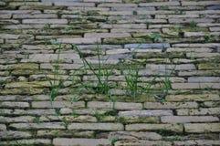 Камни Cobbled вымощая стоковые изображения