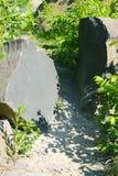 2 камня базальта на следе Стоковая Фотография RF