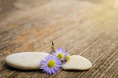2 камня и голубых цветки Стоковые Изображения