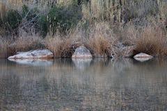 3 камня на воде симметрично Стоковое Фото