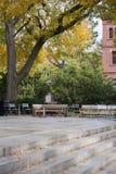 Кампус Гарвардского университета Стоковое Изображение RF