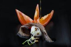 Камса, томат и моццарелла Стоковые Изображения RF