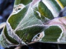 Камуфлирование бабочки Стоковое Фото