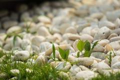 Камушки и трава Стоковая Фотография RF