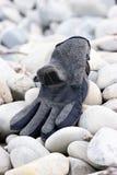 камушки перчатки потерянные Стоковые Фото
