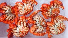 Камчатские краби стоковые фото