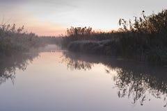 камышовое отражение Стоковая Фотография