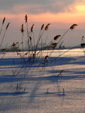 камышовый заход солнца 2 Стоковые Фото