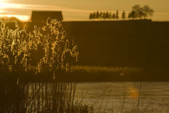 камышовый заход солнца Стоковое фото RF