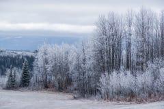 Канадское настроение зимы - край леса стоковое фото rf