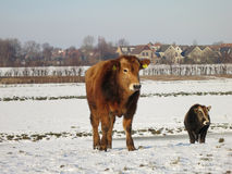 каналы, котор замерли зима ландшафта Голландии Стоковое Фото