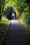 Канал доступа через заболоченные места и древесины к месту научного интереса стоковое изображение rf