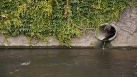 Канал с утками и трубой акции видеоматериалы