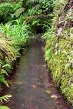 Канал Levada заполненный с водой в Мадейре стоковые фото