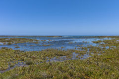 Канарские острова лугов соли Стоковое Изображение