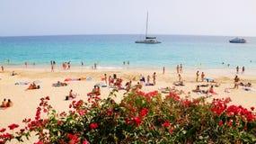 Канарские цветки в Playa del Matorral - экзотическом пляже в Morro Jable, Фуэртевентуре, Канарских островах, Испании стоковые изображения