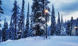Канада, до Рождества Христова, bigwhite Стоковые Изображения RF