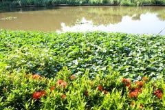 Канал внутри община Стоковые Фотографии RF