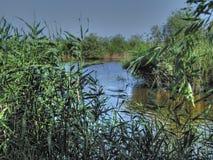 Канал между тростниками Стоковое Фото