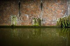 канал предпосылки треснул плавая зеленую воду заводов грязи Стоковое Изображение RF