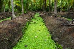 Канал сада кокоса в Таиланде Стоковое Изображение RF